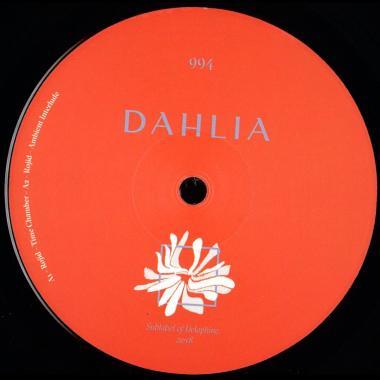 Dahlia 994